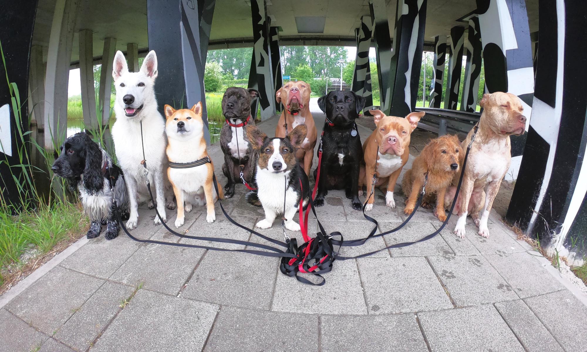Social Canine Club